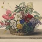 Bukiet kwiatów, kwitnie od 15 maja do 30