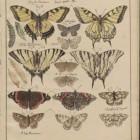 Motyle, zmierzchnice i ćmy