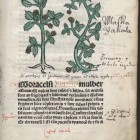 Herbarius Lat. Cum synonymis Germanicis