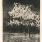 Leon Wyczółkowski, Kwitnące śliwy, autolitografia, 1933 (Gabinet Grafiki)