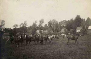 Ordynacja Przeworska – stadnina koni w Nowosielcach, lata 20. XX w.
